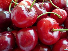 Top 10 Highest Cherry Producing Countries