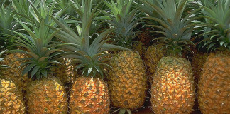Top 10 Highest Pineapple Producing Countries