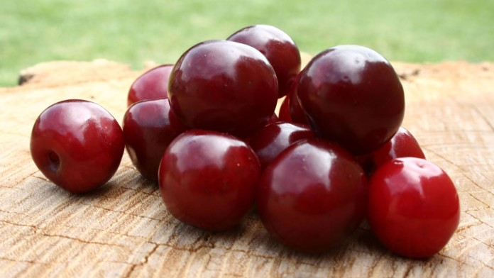 Top 10 Highest Plum Producing Countries