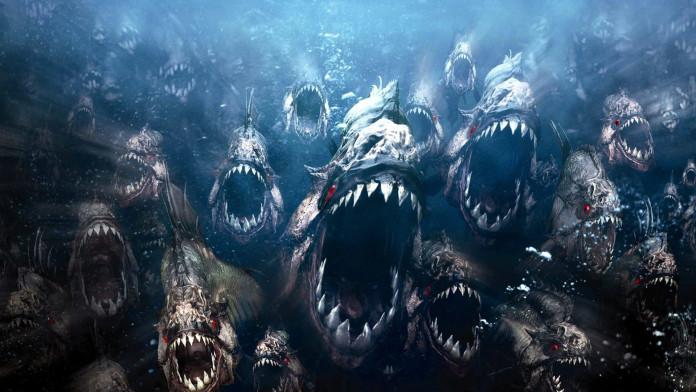 Top 10 Deadliest Fish