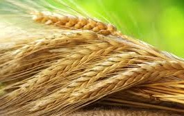 Top 10 Highest Rye Producing Countries