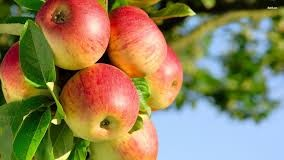 Top 10 Highest Apple Producing Countries