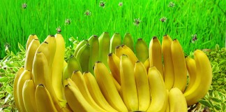 Top 10 Highest Banana Producing Countries