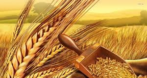 Top 10 Highest Wheat Producing Countries