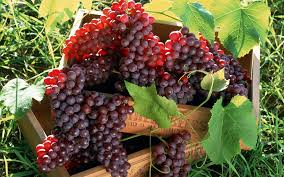 Top 10 Highest Grapes Producing Countries