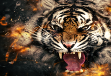 Top 10 Amazing Facts About Tigers